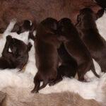 Piękne szczeniaki w parę dni po urodzeniu