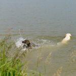 Na ten widok Pufa rusza do wody a Goran (pierwszy raz nad taką wodą) nieporadnie za nią