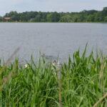 Stara i cwana kaczka łatwo wyprowadza je w pole