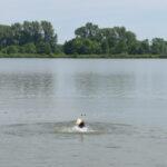 Goran próbuje wleźć na Pufę ale ona, nawet pod wodą, twardo zmierza do celu
