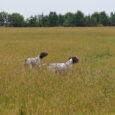 W połowie sierpnia, korzystając z paru świątecznych dni ruszyłem z Gapą i Florą na Ukrainę. W planie wyjazdu, którego duszą był Anatol – praca z psami i polowanie na przepiórki. […]