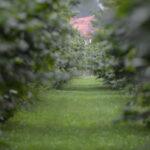 Tajemniczy ogród - tło sesji zdjęciowej