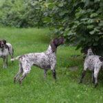 Analiza dojrzewania orzechów - Jaga jakby mniej zainteresowana