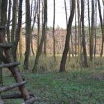 """To moja """"czatownia"""" - ciekawe miejsce w starej olszynie na skraju łąk"""