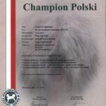 GAGA ze Skolnitego Championat Polski