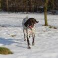 Popołudniowy, słoneczny spacer z całą psią gromadką – zapraszam.