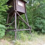 Ośrodek łowiecki na Podolu - specjalność introdukowany w czasach ZSRR jeleń usuryjski (Dybowskiego)