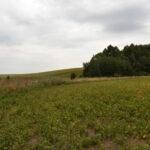Setki hektarów kukurydzy, soi a nieco dalej słonecznika - baza pokarmowa do pozazdroszczenia