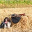 Ostatnie dni spędziłem na Ukrainie, mając możliwość wzięcia udziału z Gapą w polowaniu na przepiórki. Gospodarzem była Anatolij, v-ce szef Ukraińskiego Klubu Wyżłów. Miałem też okazję spotkać się z szefem […]