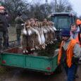 Są takie polowania, które od zawsze wiążą się z polską tradycją łowiecką. Takim z pewnością jest zimowe polowanie na zające. W przeszłości to polowanie kojarzyło się szeroką przestrzenią zasypanych śniegiem […]