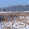 W kalendarzu polowań zbiorowych 2016/2017 sezon w moim kole miał zakończyć się 8 stycznia polowaniem zbiorowym na bażanty. Mnie wyznaczono na prowadzącego polowanie. Jednak w ostatnich dniach temperatura nocą spadała […]