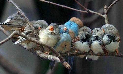 Kontynuując prezentację obrazów zapowiedzianych w poprzednim poście, pokazuję tym razem aktywność drobnego ptactwa w okolicach posypu. Wydawać by się mogło, że obecność dziesiątków drobnych zjadaczy karmy może być pewną uciążliwością […]