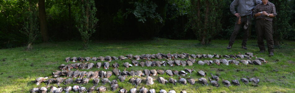 """Pierwsze w sezonie polowanie na kaczki w oświęcimskiej """"Cyrance"""" ma zawsze swoją magię i ściąga grono zacnych nemrodów. Nie inaczej było tym razem. Sporo kaczek, liczne lęgowe gęsi, które wiedząc, […]"""