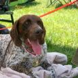 Miniony weekend był z pewnością udanym czasem dla szczeniaków z miotu H. HANA, będąca obecnie na szkoleniu w Czechach u Martiny Mullerowej, stanęła do rywalizacji na konkursie wielostronnym w Svobodne […]