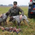 Ostatnio, na FB-kowych stronach dedykowanych myśliwym pojawiły się obrazy z polowań na grubego zwierza u naszych zachodnich kolegów. Imponujące pokoty, liczny udział psów ubranych w malownicze kamizelki – robią wrażenie. […]