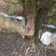 Ze względu na Szczyt klimatyczny ONZ 2018 w Katowicach mamy, trwający od 1 grudnia, przez 2 tygodnie, zakaz polowania w województwach śląskim i małopolskim. Cóż, stworzyła się okazja dla realizacji […]