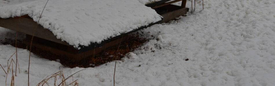 Śnieg pada i pada, a końca tego padania nie widać. Parę dni temu rozwoziliśmy z Maćkiem karmę bażantom ale postanowiłem pomimo to pojechać kolejny raz. Po pierwsze – uzupełnić zapasy, […]